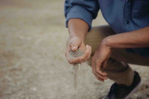 A Soil Scientist pouring soil with their hand