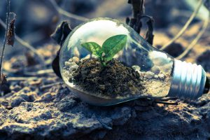 Soil and a plant in a bulb